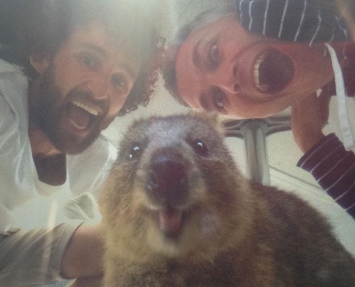 Quokka Selfie Trend - Image 20.