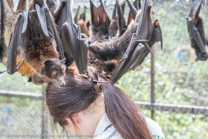 The clinic provides the best possible care for a large variety of bats, big or small.