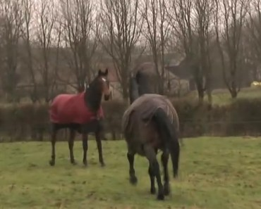 These Horses Were Reunited After 4 Years of Being Apart.