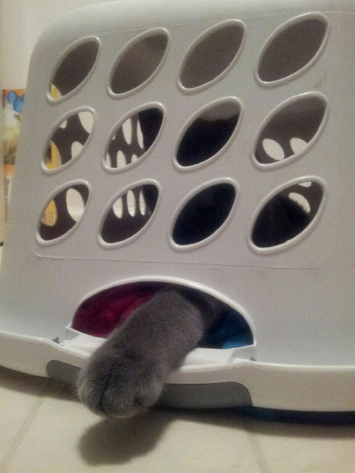 "15 Hilariously Curious Cats - ""Are the clothes in this laundry basket important to you. Yes? Then let me out!"""