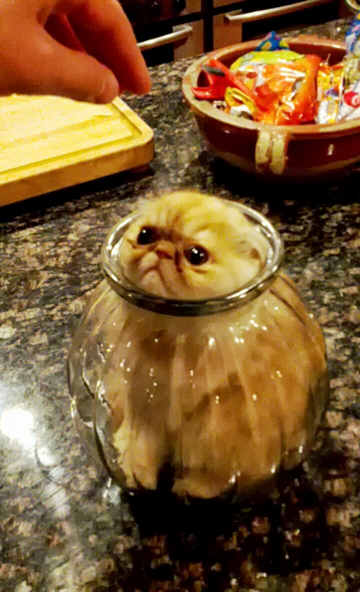 "15 Hilariously Curious Cats - ""You can't tell me what to do, silly human."""