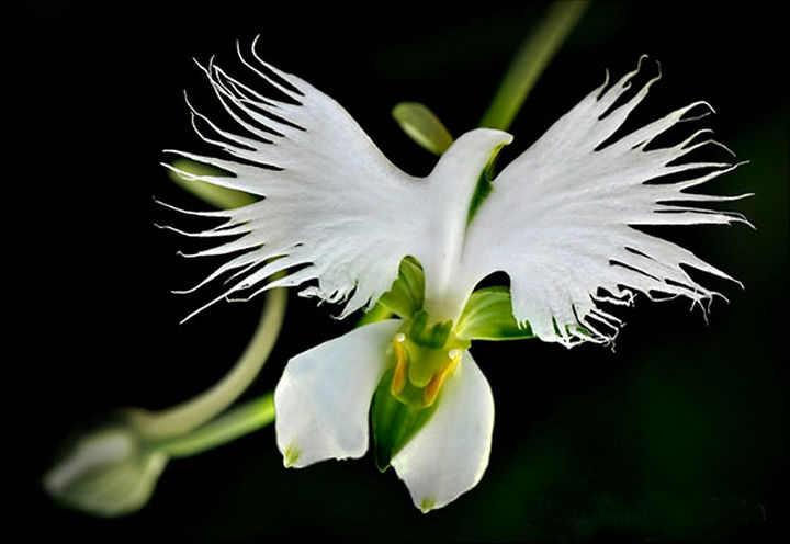 25 Things That Can't Be Unseen - A white bird orchid.