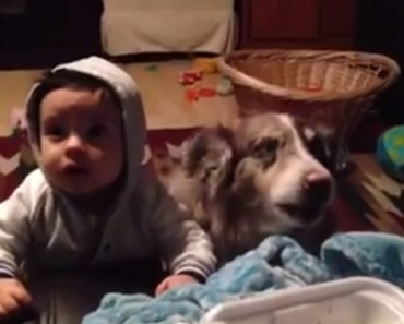 Family Dog Says the Word 'Mama' for a Bite of Mom's Dinner.