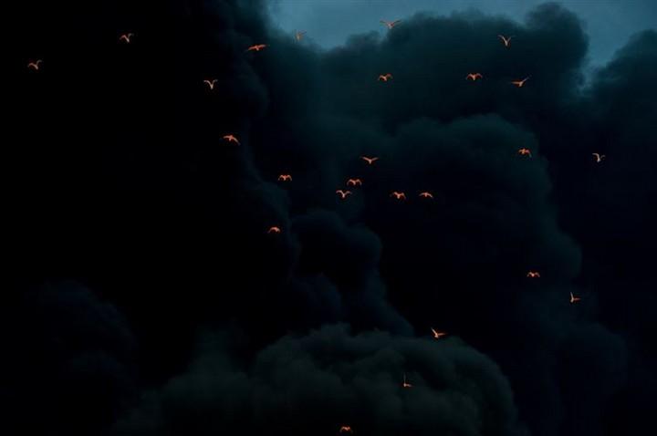 21 Awe-Inspiring Photos - Fire reflected on birds on a backdrop of black smoke.