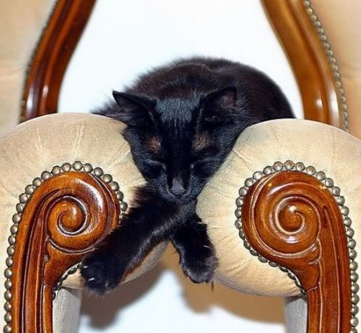24 MORE Cats Asleep in a State of Bliss - Why sleep on one chair when you can sleep on two?