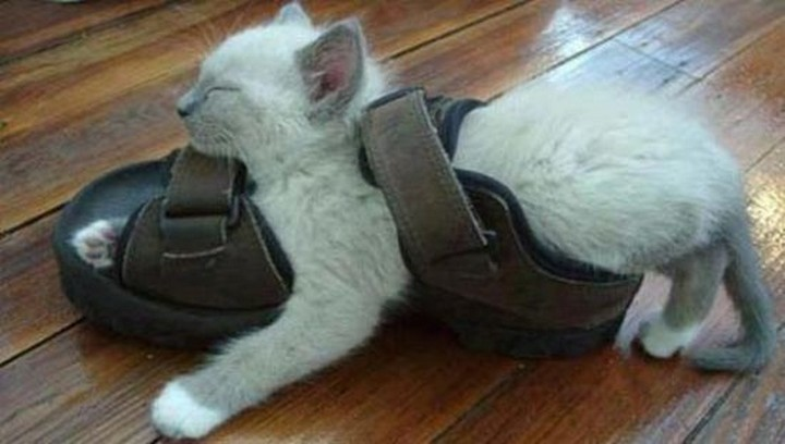 24 MORE Cats Asleep in a State of Bliss - Sandal warmers.
