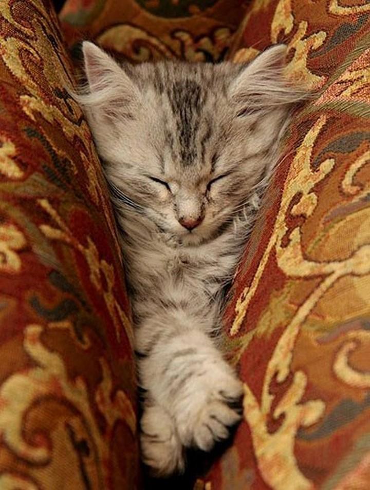 catssleepinweirdplaces.tumblr