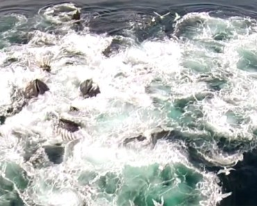A Drone Flying Over Alaskan Waters Captures Whales Feeding.