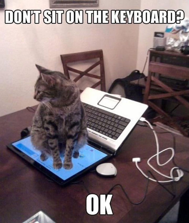 21 Cat Logic Photos - Technically, he did listen.