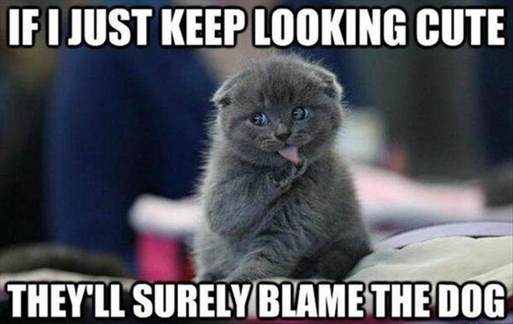 21 Cat Logic Photos - Looking cute nearly always works.