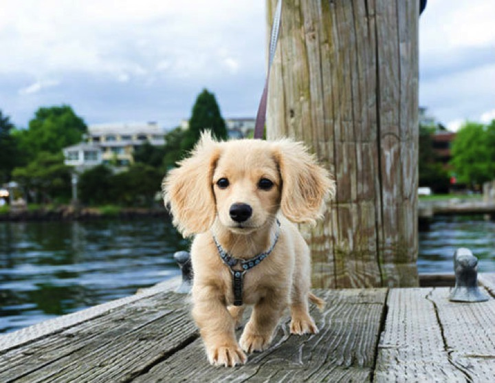 """28 Cute Dachshunds - """"I'm blond...and I'm gorgeous!"""""""