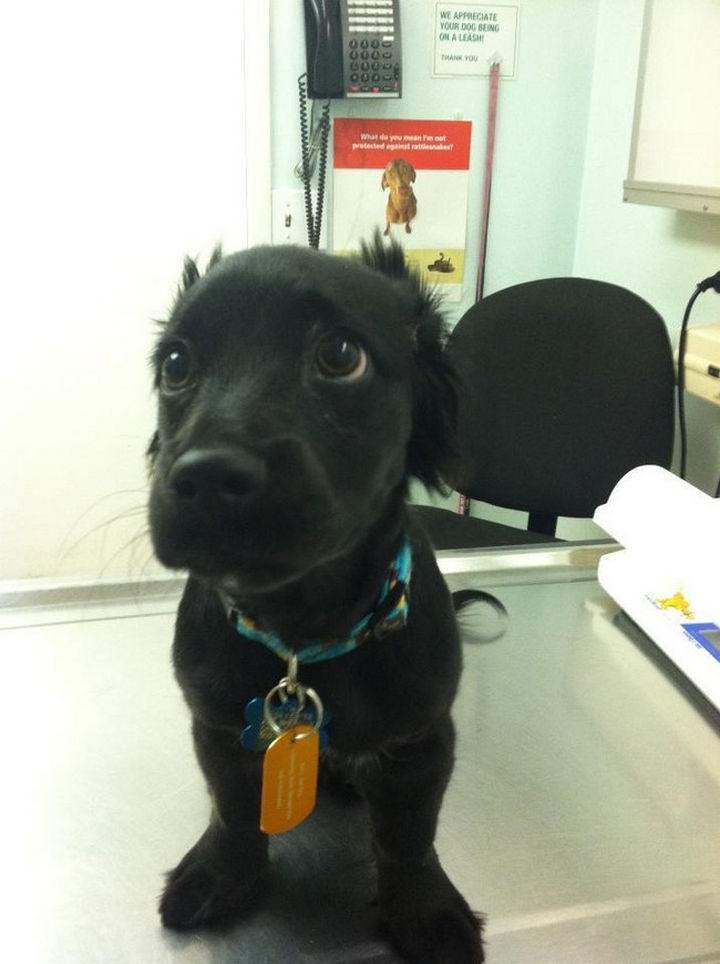 """28 Animals Going to the Vet - """"Time to play the 'sad puppy eyes' card"""""""