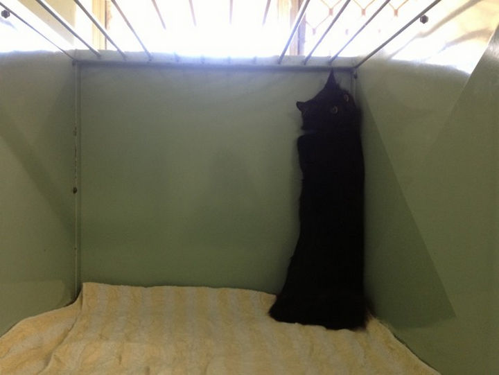 """28 Animals Going to the Vet - """"There must be a secret door out of here somewhere."""""""