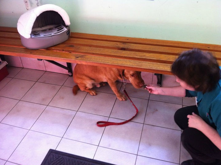 """28 Animals Going to the Vet - """"These treats are good but they are not helping. I'm still mad at you."""""""