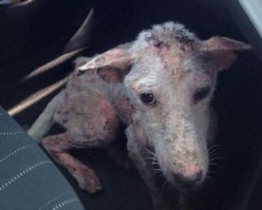 An Abused Dog Named Kelsey Was Saved and Transformed.
