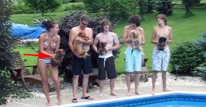 Five Dachshund's Enjoying a Competitive Race in the Pool.