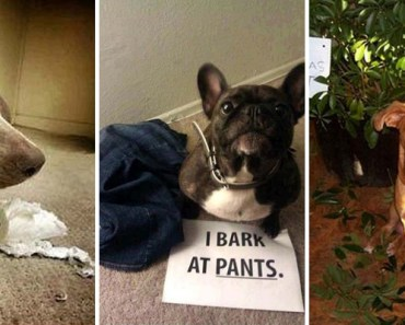 22 Dogs Being Shamed for Their Cute Crimes.