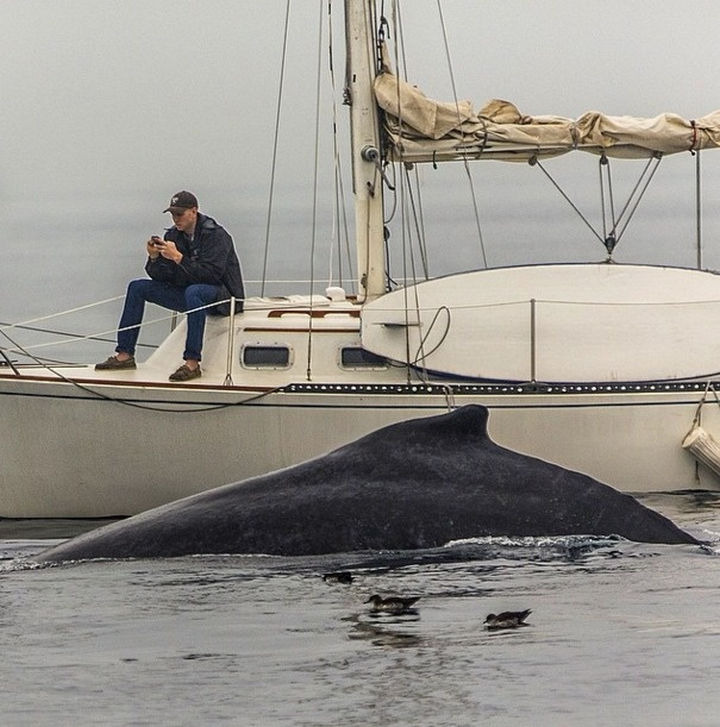 28 Perfectly Timed Photos of People Having a Bad Day - When a smartphone gets all your attention.