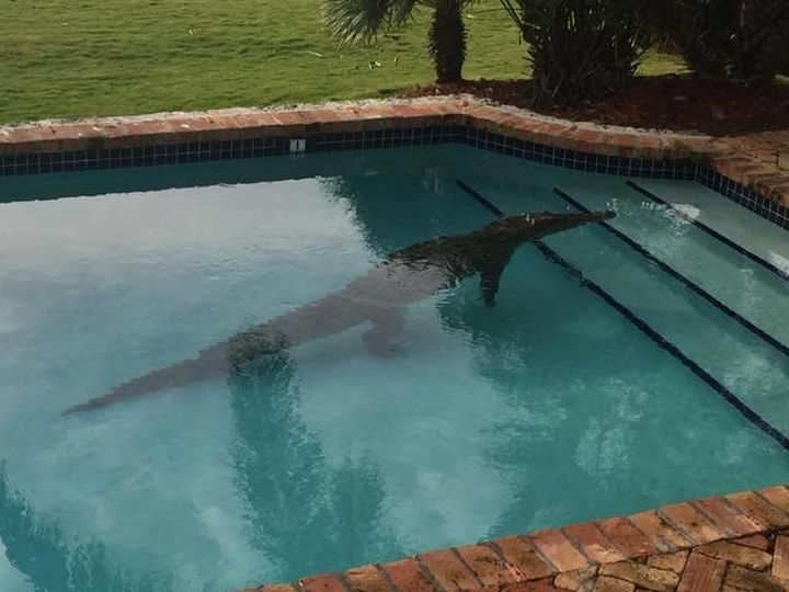 28 Perfectly Timed Photos of People Having a Bad Day - Swim at your own risk.
