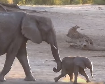 This Baby Elephant Didn't Want Bath Time to End!.