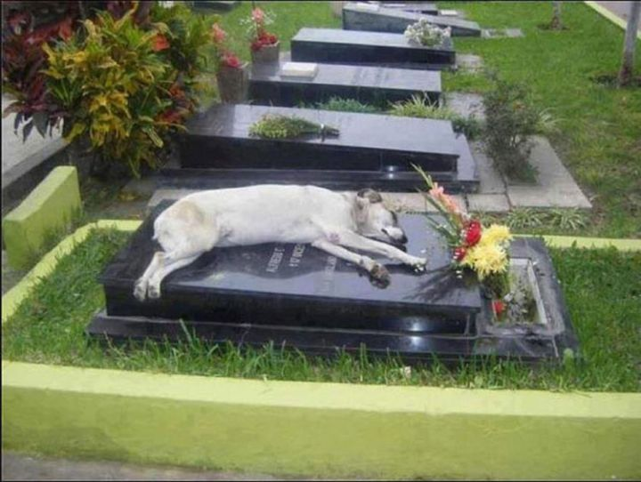 9 Heartbreaking Images - A dog sleepson the grave of his deceased owner. He liedthere for hours.