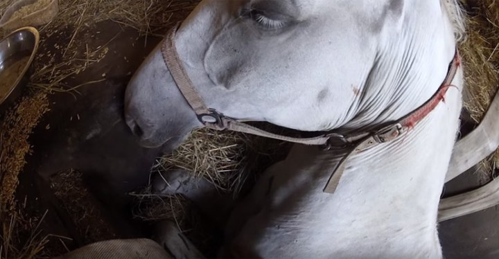 Freedom the Horse Gets Rescued After Falling in a Pit.