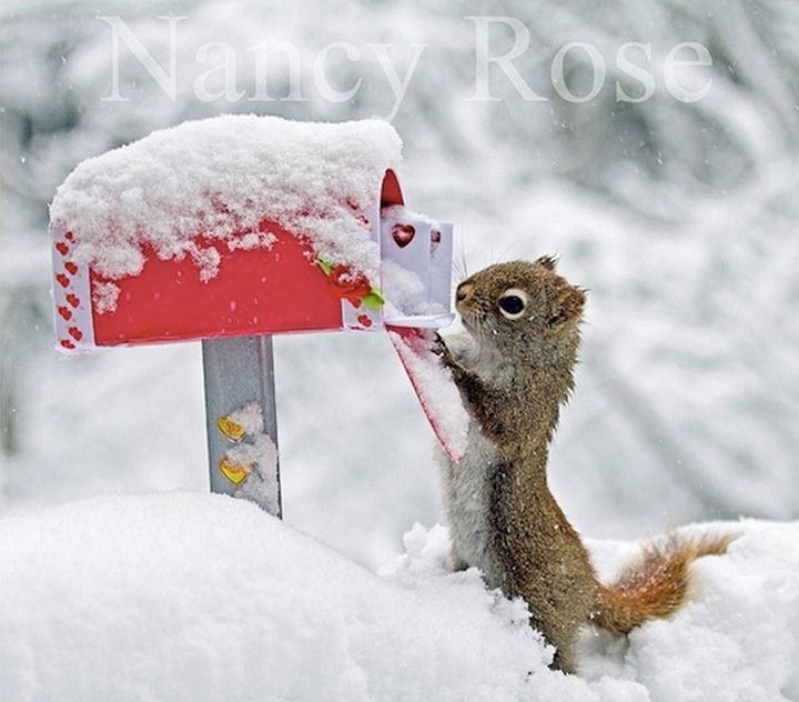 Nancy Rose captures whimsical photos and created children's books and calendars.