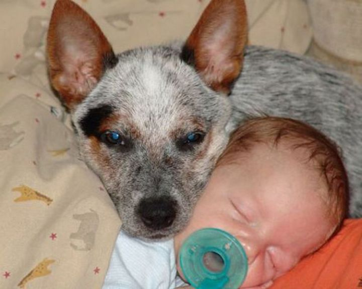 14 Dogs and Babies - It melts your heart.