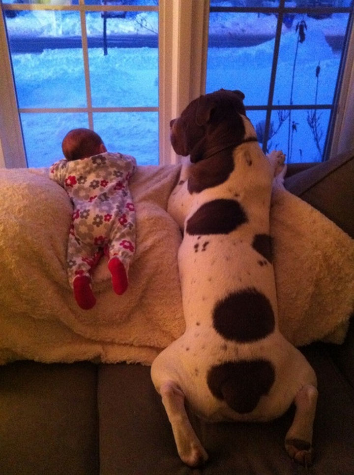 33 Adorable Photos of Dogs and Babies - Waiting for daddy to get home.