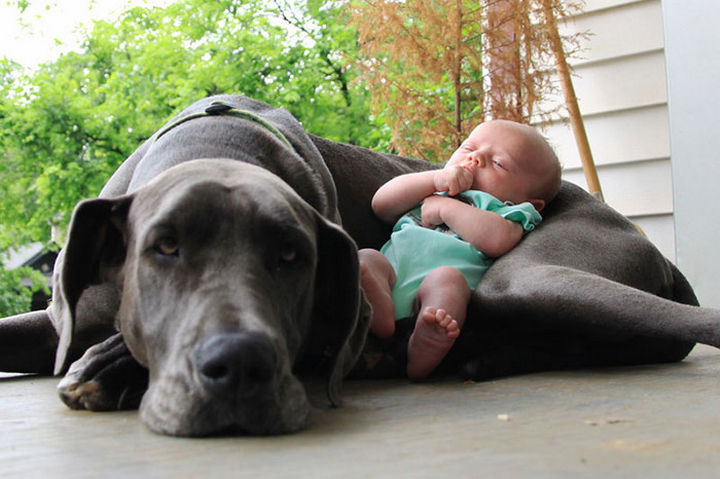33 Adorable Photos of Dogs and Babies - Keeping baby safe.