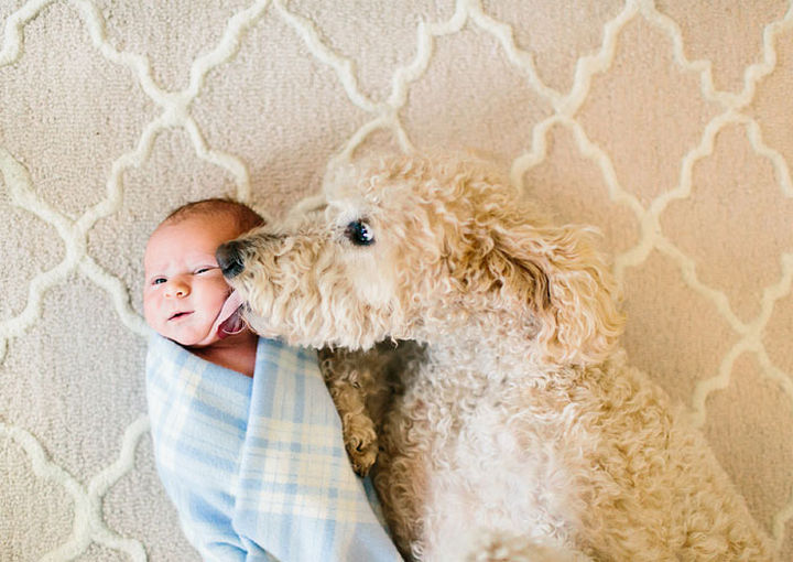 """33 Adorable Photos of Dogs and Babies - """"Welcome home, little one."""""""