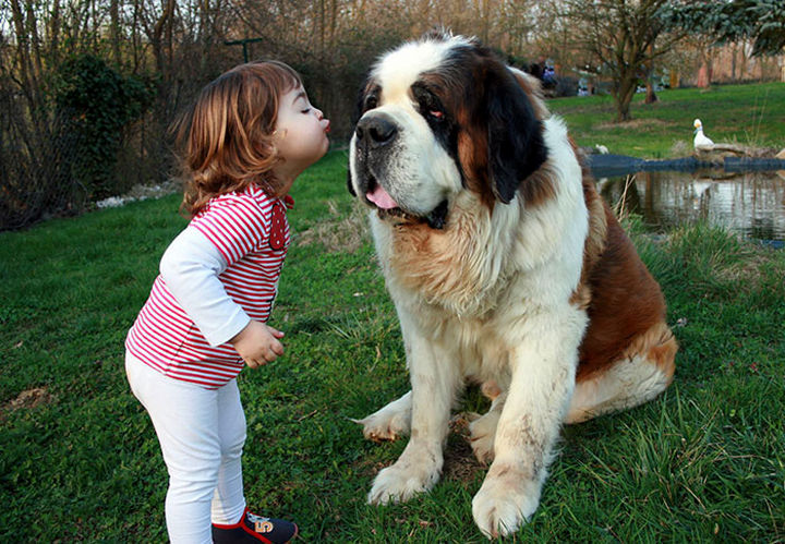 """33 Adorable Photos of Dogs and Babies - """"Give me a smooch!"""""""