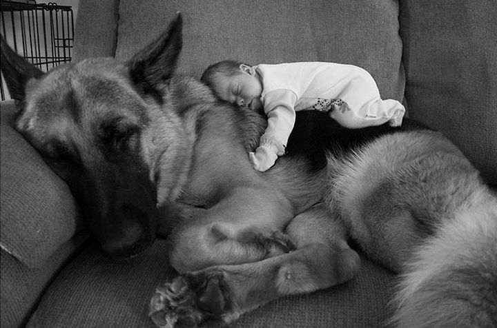 33 Adorable Photos of Dogs and Babies - The moose and squirrel :)