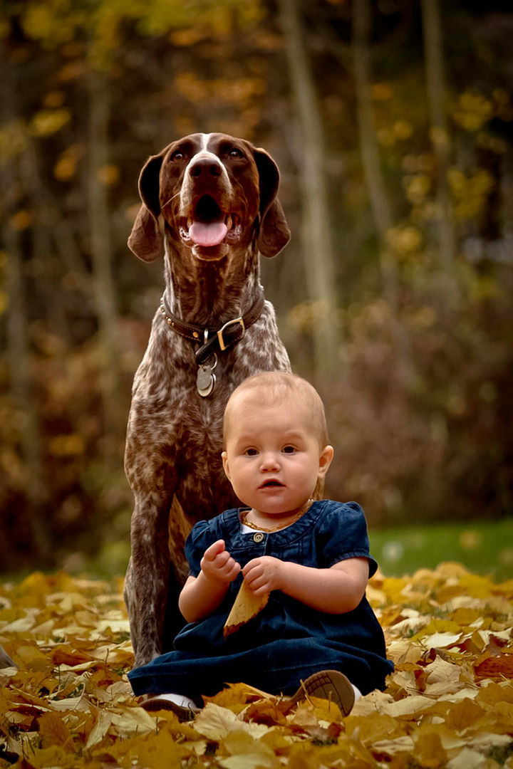 """33 Adorable Photos of Dogs and Babies - """"I will protect her."""""""