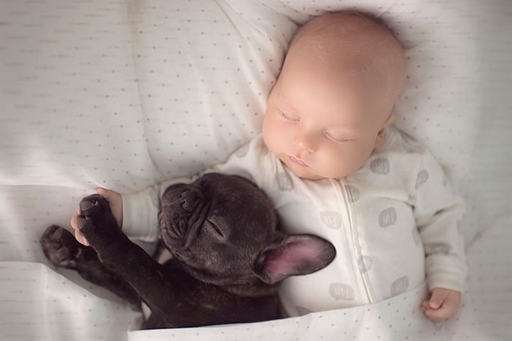 33 Adorable Photos of Dogs and Babies - Giving a high-five.