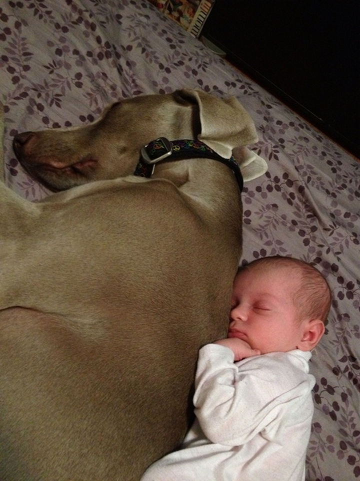 33 Adorable Photos of Dogs and Babies - He will protect him forever.