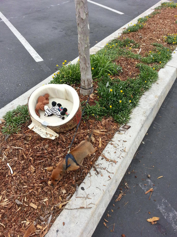 Man Finds a Puppy Tied to a Tree on His Way to Work.