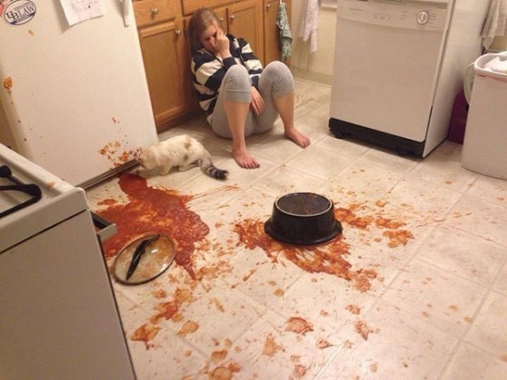 28 People Having a Bad Day - Dinner is wasted but the cat seems to be having fun.