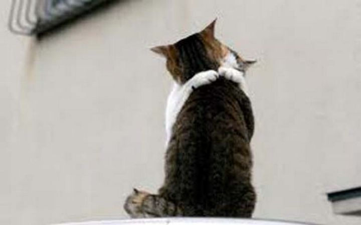 10 Photos of Cats Hugging - Never letting go of his sweetheart.