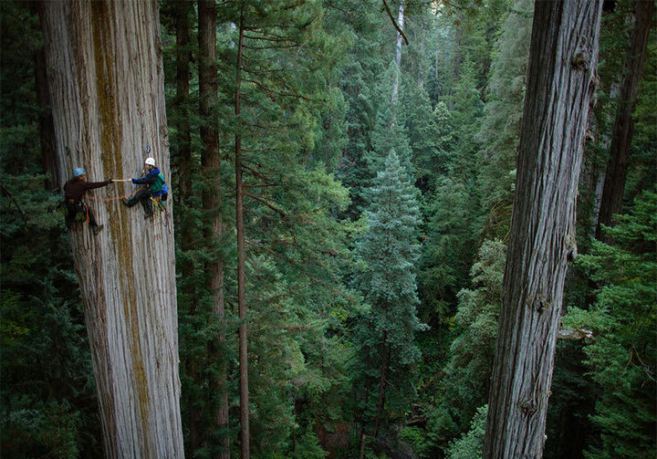 32 People Who Look Fear in the Eyes - Hanging out on a 750-year-old sequoia tree.