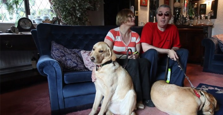 Blind Couple Find True Love With the Help of Their Guide Dogs.