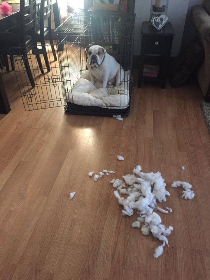 "13 Dogs Feeling Guilty - ""I got nervous."""