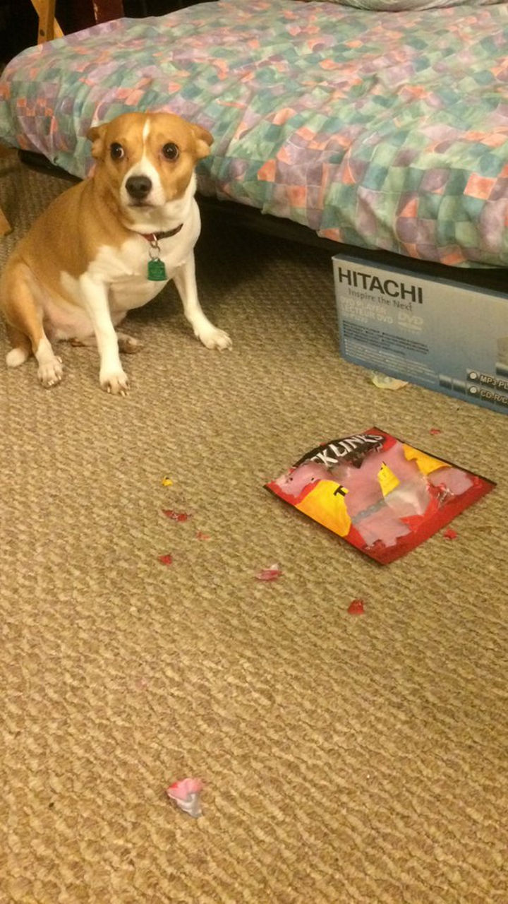 """13 Dogs Feeling Guilty - """"Were you really going to eat that beef jerky? It was delicious BTW."""""""
