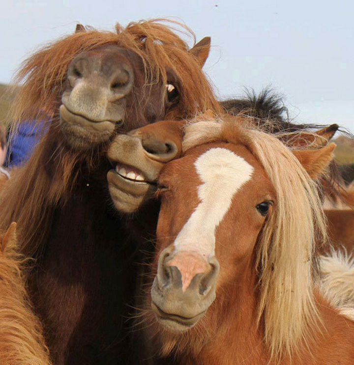 22 Funny Animal Selfies - Three friends being silly for their selfies.