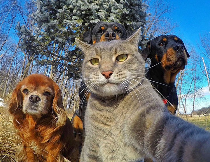 22 Funny Animal Selfies - Livin' the thug life.