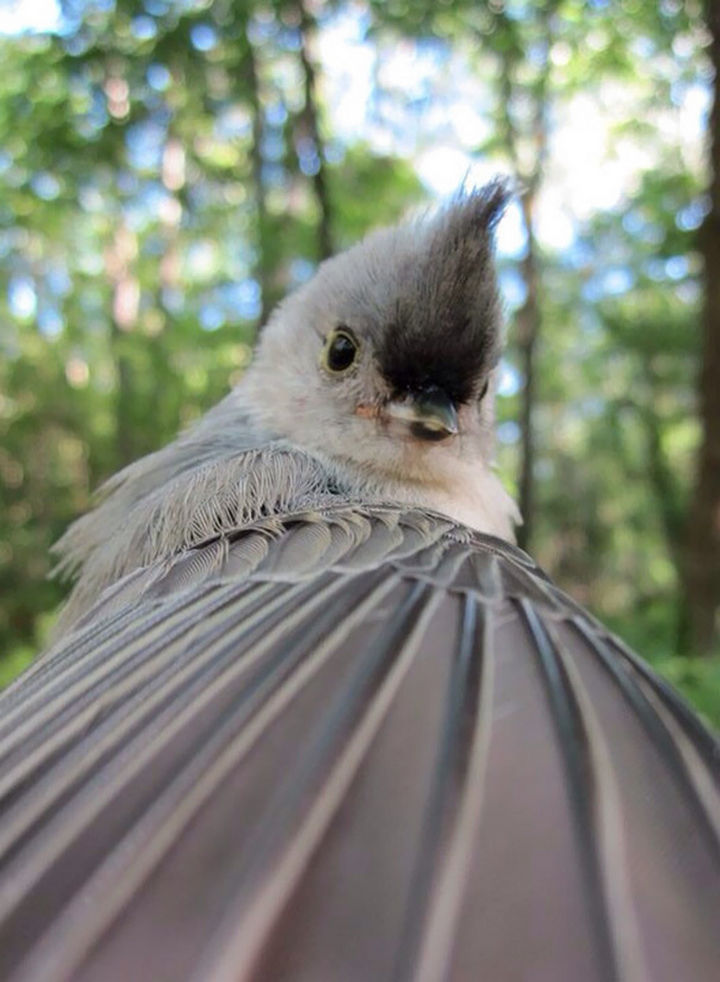 "I wonder if this bird ""tweeted"" his cute selfie?"