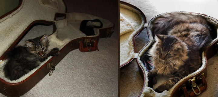 29 Before and After Photos of Family Cats - Roadie in training.