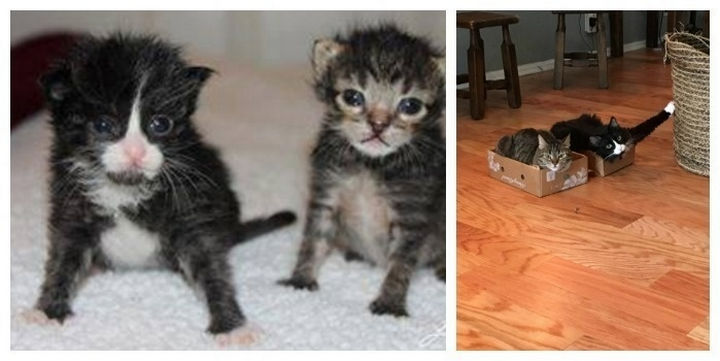 29 Before and After Photos of Family Cats - Two sisters growing up with a loving family.