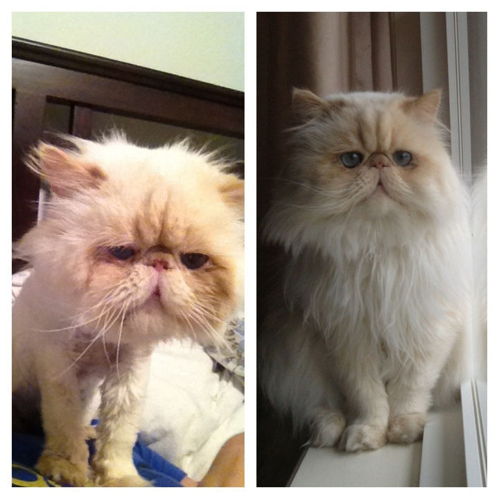 29 Before and After Photos of Family Cats - A family's love has transformed this majestic cat.
