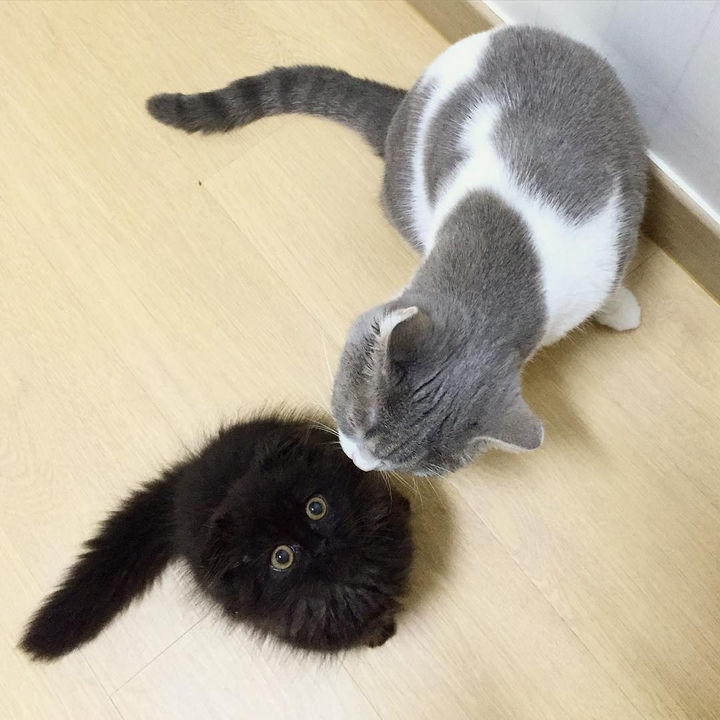 Gimo gets a lot of attention (and kisses!) from his other friends too.